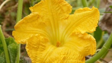 Photo of 10 съедобных цветков, которые подходят для украшения еды