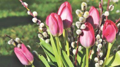 Photo of Букет от любимого должен радовать долго: как сохранить свежесть цветов
