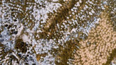 Photo of Когда грибы растут на стенах: избавляемся от плесени бюджетными способами