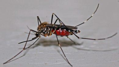 Photo of Комариные укусы — последствия