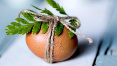 Photo of Как продлить срок годности яиц до 12 месяцев