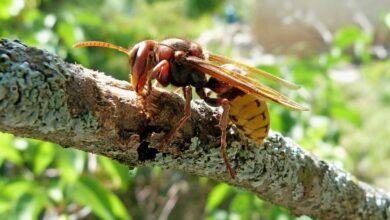 Photo of Укусы пчел и ос: спасаемся от «яда» насекомых