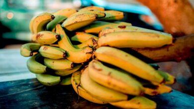 Photo of Почему некоторые фрукты не могут дозреть в домашних условиях