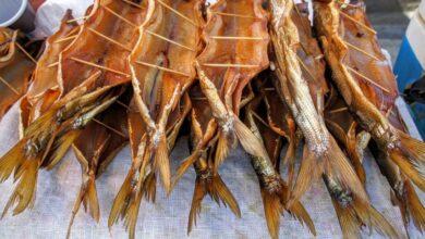 Photo of Чем полезна вобла и кому можно есть сушеную рыбу