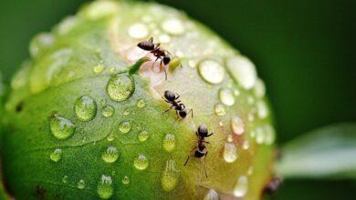 Photo of Запах после дождя: откуда берется и чем бывает опасен