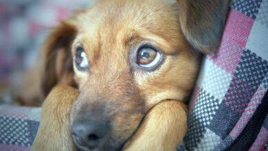 Photo of Ученые: собака готова спасать человека до определенного момента