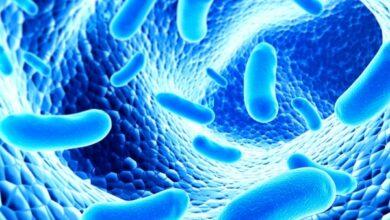 Photo of Ученые нашли в вечной мерзлоте бактерии, поедающие пластик