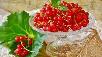 Photo of Красная смородина – природный отбеливатель веснушек и пигментных пятен