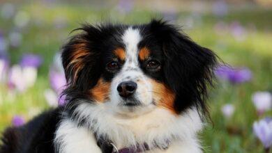 Photo of Собаки-терапевты: россиянам предложили «открыться животному», чтобы снять стресс из-за COVID-19