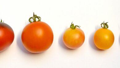 Photo of Томатный сезон используем для ухода за лицом: маски, тоник и компресс из помидоров