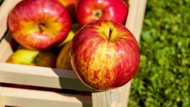 Photo of Обнаружена новая польза яблок: спасают от рассеянного склероза