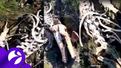 Photo of На Ямале нашли скелет гигантского существа
