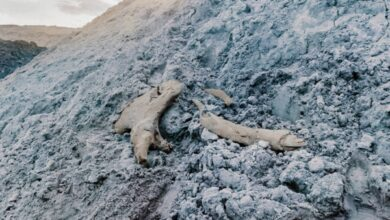 Photo of На ямальском месторождении нашли останки мамонта