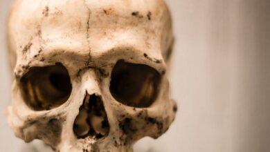 Photo of Лекарственный каннибализм: чем лечились наши предки