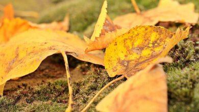 Photo of Опавшая листва может стать причиной вирусных заболеваний