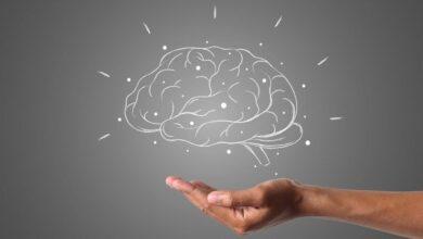 Photo of Как в человеке «уживаются» три уровня мозга: рептилия, млекопитающее и неокортекс