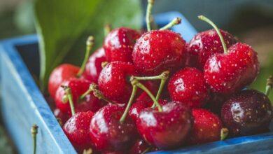 Photo of Эксперт назвала ягоды, которые не стоит замораживать