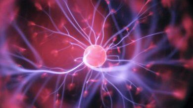 Photo of Российские ученые удалили из клеток ядро и увидели: слабее клетки не стали