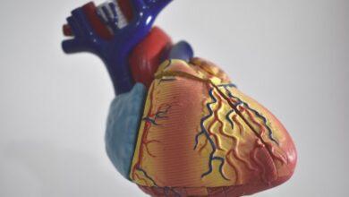 Photo of В России провели уникальную операцию на сердце – удалили саркому и заменили легочный ствол желудочка