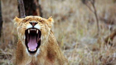 Photo of Неожиданные преимущества гнева: креативность, оптимизм, удачная карьера
