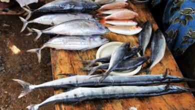 Photo of Даже морская капуста: продукты, опасные для щитовидки