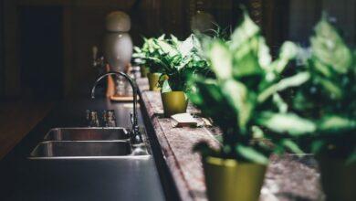 Photo of Воздух в доме: пять комнатных растений для чистоты и свежести