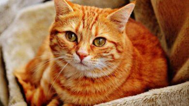 Photo of Ученые: царапины кошек могут вызвать психическое расстройство