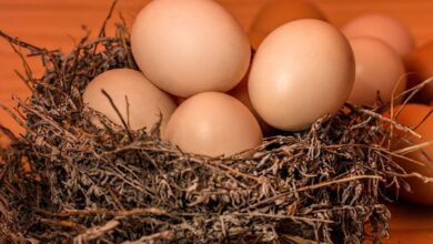 Photo of Полезно знать каждому: 9 интересных фактов о яйцах
