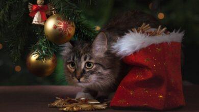 Photo of Как не превратить Новый год в стресс и сохранить волшебство праздника