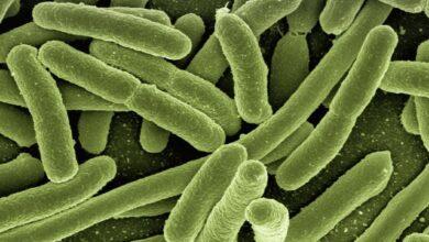 Photo of Ученые открыли удивительные факты о бактериях
