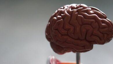 Photo of Вы удивитесь: 6 заблуждений относительно головного мозга