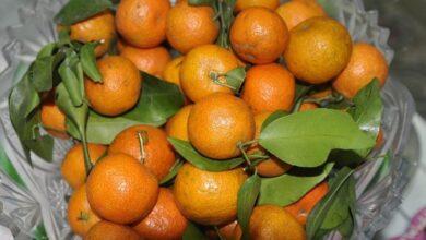 Photo of Новогодний мандарин: как он помогает при бронхите, гипертонии и расстройствах пищеварения