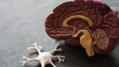 Photo of Эпилепсия: влияет ли болезнь на личность человека, какая здесь связь с паразитами и какое лечение эффективно