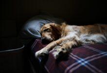 Photo of Зимняя усталость, или Снова на работу