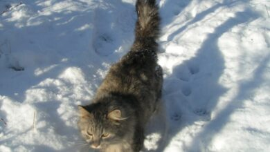 Photo of Кошки это продолжение человека