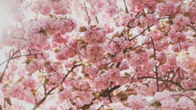 Photo of Как облегчить симптомы весенней аллергии